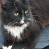 Kristoffer katt