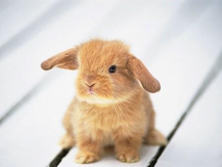 Kristoffer cutie