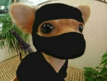 M.O dog-feel-like-a-ninja-34754109