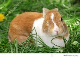 Kristoffer rabbit